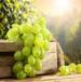 绿葡萄,健康有机绿色,无农业残留,酸甜可口,美味多汁