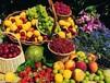 青岛港进口台湾水果需要哪些资料