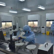 MOVAS科研复苏细胞系