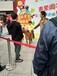 英國設特蘭矮馬出租展覽展示