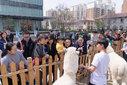上海黄浦区黑鼻羊租赁-白羊驼转租-出租草泥马-广告电影拍摄庆典图片