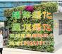 广州植物墙做法,墙体绿化