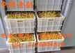 开原市大批量生豆芽机器,智能豆芽机,豆芽机器价格