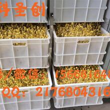生豆芽的机器,全自动豆芽机哪个牌子好图片