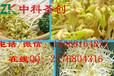 绥滨县自动生豆芽机,全自动豆芽机械多少钱