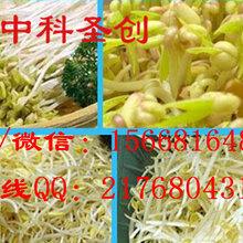 绥滨县自动生豆芽机,全自动豆芽机械多少钱图片