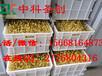 萝北县全自动豆芽机机械设备,有机豆芽生产机器