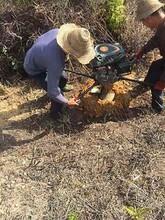 高效栽树挖坑机图片
