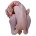 衢州土鸡肉养殖场、衢州柴鸡肉合作社