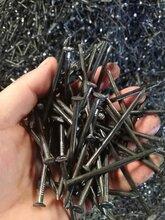 厂家直销建筑铁钉、抛光铁钉、木工专用铁钉现货直销图片