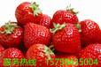新世界一颗颗鲜红的草莓出售了!