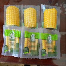 供应潍坊昊坤玉米420全自动连续拉伸膜真空包装机批发