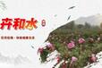 卉和水招商加盟玫瑰花饮卉和水品牌代理玫瑰水品牌代理