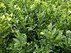 供应适合张家界脐橙种植发展常德大量纽荷尔脐橙苗批发