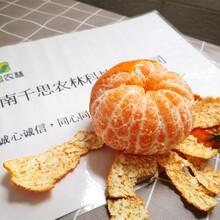 常德千思甘平柑橘苗相比沃柑苗长势更旺盛更抗溃疡图片