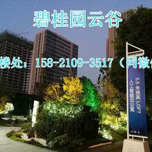 南通碧桂园云谷详细资料——官方网站