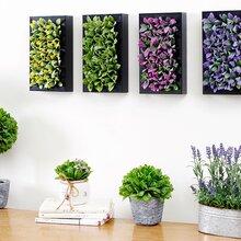 定制立体相框批发多肉仿真植物/仿真花卉专用内空加厚植物画框