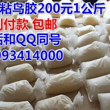 越南胶什么价格制作粘鸟胶的视频教程那里卖粘鸟胶粘麻雀胶货到付款