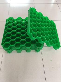 新型植草格5公分塑料平口植草格绿化植草格