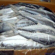 日本鳕鱼/梭鱼/?#31169;?#40060;/马面鱼进口清关的核辐射证明是什么样格式的?