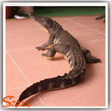 广州松涛工艺仿真动物雕塑人造鳄鱼模型雕塑