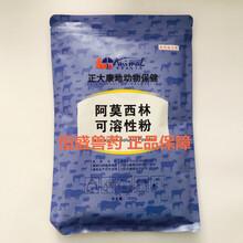 兽用阿莫西林可溶性粉广东兽药恒盛兽药
