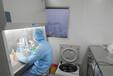 GIST-T1复苏培养细胞系