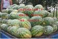 山西省忻州低價出售西瓜