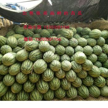 山西省忻州西瓜代办;大量出售优质西瓜