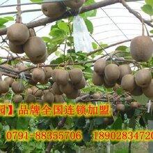 合伙創業新方式連鎖加盟賣水果到中紅果園