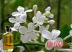 供应植物香料油丁香油