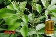 供应牡荆油牡荆油由牡荆枝叶蒸馏而成