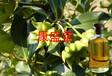 厂家供应药用八角油食用八角油茴香油大茴香油八角茴香油