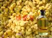 食品级生姜油价格纯天然提取食用生姜油