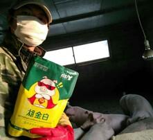 快速養豬法,養豬催肥偏方,豬催肥飼料添加劑,育肥豬專用白金肽圖片