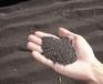 安陆市有机有机油菜籽原装现货有机有机油菜籽优惠促销