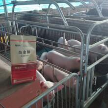 上海誼鑫豬用微生態制劑-白金肽圖片