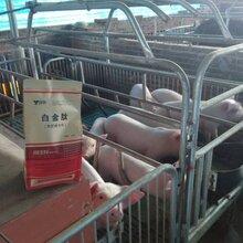 上海谊鑫猪用微生态制剂-白金肽图片