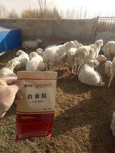 肉牛催肥绿色饲料添加剂牛吃什么长得快图片