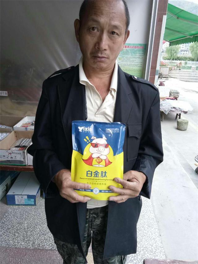 内蒙古猪饲料猪如何催肥