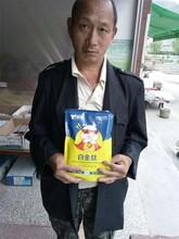 湖南猪饲料猪猛吃猛长催肥剂图片