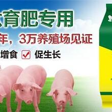 江西日长三斤仔猪白金肽图片