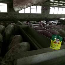 甘肃饲料添加剂育肥猪白金肽图片