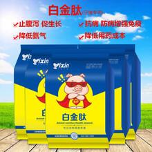 广东仔猪拉密腹泻偏方大全小猪吃什么长得快图片