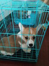 青岛腾安达宠物托运航空托运火车托运上门接宠图片