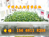全自动芽苗菜机多少钱一台自动芽苗菜机生产厂家热卖