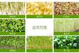 芽苗营养液什么牌子好用价格多少江苏上海河北河南
