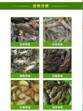 蟹塘管理水产专用菌什么价格厂家联系方式宿州南通泰州