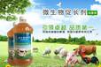 降低养猪成本催肥促长出栏快催肥剂什么价格河南山东广西江西