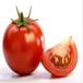 供應純天然有機西紅柿綠色新鮮基地直銷